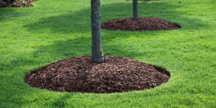 planting-landscape-installation
