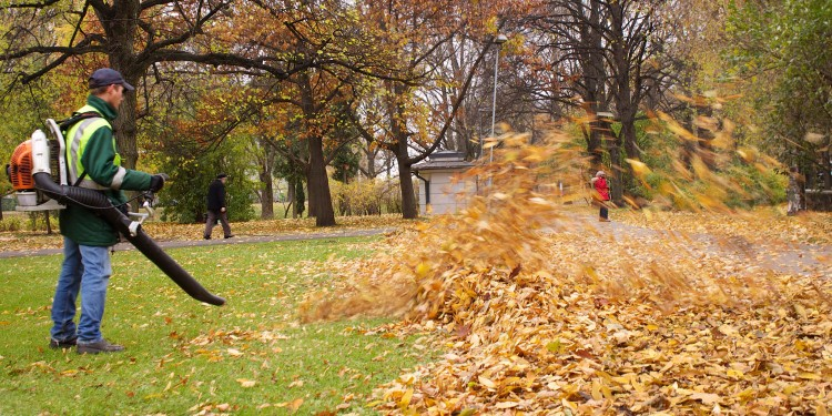 seasonal-leaf-clean-up
